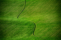 Green meadow background Royalty Free Stock Photography