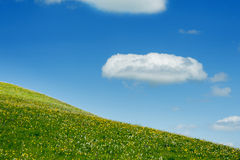 Green meadow on a background of the blue sky Stock Photo