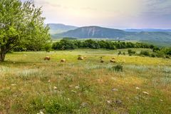 Green meadow on the background with distant mountains. Open field with green grass. Landscape photograpy stock photos