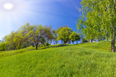 Green meadow background Royalty Free Stock Photos