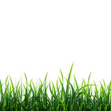 Green meadow background Royalty Free Stock Image