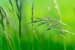 Green Meadow Background Stock Photo