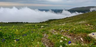 Green meadow in the background of mountains in the fog. Altai Krai. Green meadow in the background of the mountains in the fog. Altai Krai Stock Photos
