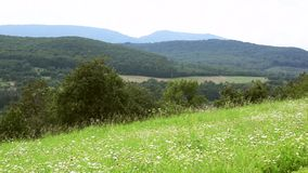 Green meadow on the background of mountains. HD stock footage