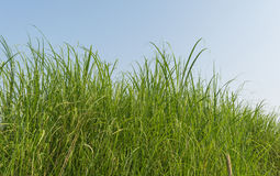 Green meadow. Background. selective focus Stock Images