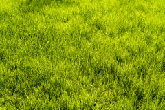 Green meadow for backgrounds Royalty Free Stock Photos