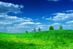 Green meadow with beauty blue sky Royalty Free Stock Photo