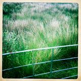 Green meadow behind fence. A green countryside field behind a fence. taken with mobile phone Stock Photos