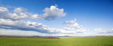 Green meadow and blue sky. Green meadow and a blue sky with white clouds royalty free stock photography