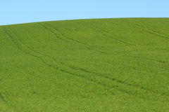 Green meadow and blue sky. Green grassy meadow and blue sky Stock Photo