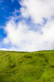 Green meadow and blue sky. With clouds Royalty Free Stock Photos