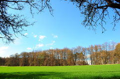 Green meadow and blue sky. Separated by a row of trees Royalty Free Stock Photos