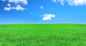 Green meadow and blue sky Royalty Free Stock Images