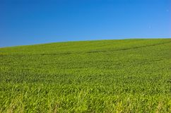 Green meadow and blue sky. Green grassy meadow and blue clear sky Royalty Free Stock Photos