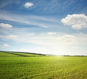 Green meadow and blue sky. Beautiful landscape of green meadow and blue sky Royalty Free Stock Photo