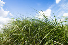Green meadow. Blue sky with clouds. Royalty Free Stock Images