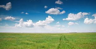 Green meadow and blue sky Royalty Free Stock Image