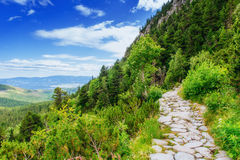 Green meadow and blue sky with clouds over the mountains Ukraine Royalty Free Stock Photography
