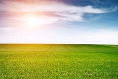 Green meadow and blue sky. Field with green grass and blue sky with sun Stock Image