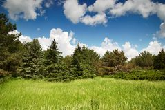 Green meadow and blue sky with forest Royalty Free Stock Images