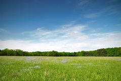 Green meadow and blue sky with forest Stock Photography