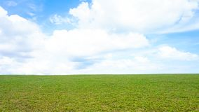 Green meadow and blue sky. Panoramic spring landscape and blue sky Stock Photography