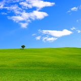 Green meadow and blue sky. Single tree among green rolling hills and vibrant blue sky Stock Photo