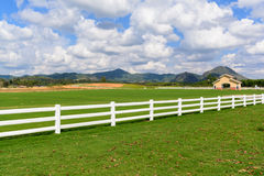 Green meadow with blue sky and white fence Royalty Free Stock Images