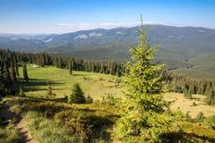Green meadow in Carpathians Stock Photo