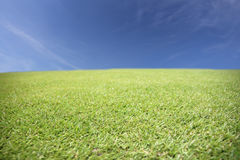 Green meadow. Royalty Free Stock Photos