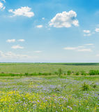 Green meadow and clouds in blue sky Royalty Free Stock Photos