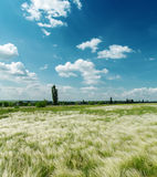 Green meadow and clouds Stock Photography