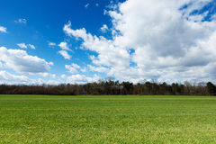 Green meadow with cloudscape Stock Photography