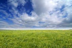 Green meadow Royalty Free Stock Photos
