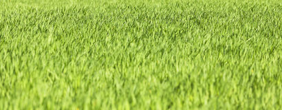 Green meadow. Color image Stock Photography