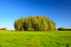 Green meadow, copse and blue sky - blurry and contrasting colors. Green meadow, copse and cloudless blue sky - blurry and contrasting colors stock photos