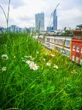 A green meadow with daisies in a warm spring day on the top of Brick Lane in London. 1 stock image