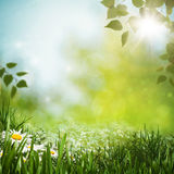Green meadow with daisy flowes Royalty Free Stock Photo