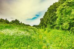 Green meadow with ditch. Royalty Free Stock Photography