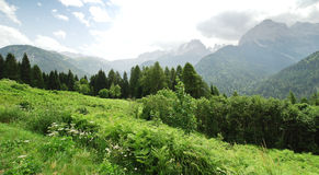 Green meadow in Dolomites mountains in summer Stock Images