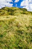 Green meadow in Edinburgh Royalty Free Stock Photography