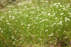 Green meadow field Royalty Free Stock Photos