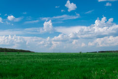 Green meadow. Green field under a bright blue sky. Picturesque clouds Stock Photography