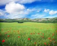 Green meadow with flowers and cloudy blue sky in mountain. Stock Photo