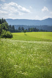 Green meadow with flowers Royalty Free Stock Images