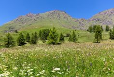 Green meadow with flowers and mountains on background in Italy. Stock Photography