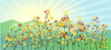 The green meadow with flowers Royalty Free Stock Photos