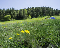 Green meadow in a forest and tent Stock Images