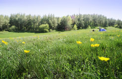 Green meadow in a forest and tent Royalty Free Stock Photo