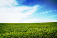 Green meadow with fresh grass with blue sky Stock Photos
